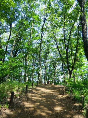 ▲木漏れ日の小道