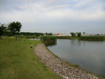 ▲公園の水辺。遠くに飛行場が見える