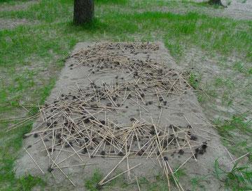 Struktur nur noch 2D - gleiche Form (Foto: R. Helmholtz)
