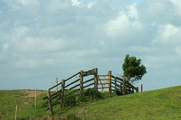 Holzzaun auf dem Sommerdeich - Foto J. Petersen