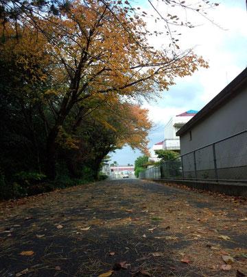 西郷小学校の通学路・・・秋には、お父さんが植えたトウテイランが咲きます♪