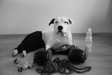 Liam pronto per l'allenamento settimanale