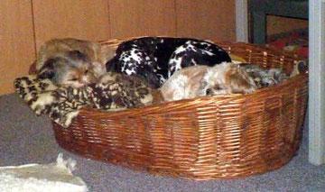 Gomez, Ebi und Sheila im Bürokorb, wg. Überfüllung geschlossen!