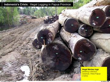 2002年メルバウは月30万m3違法伐採 by Telapak/EIA