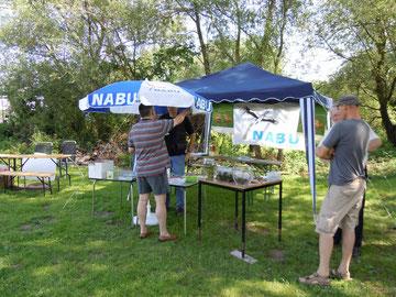 Wir informieren! Hier beim Elbebadetag 2011 (Foto: Marcel Majchrzak)