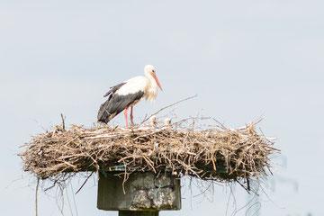 Betonmast Nest 2 ; Foto: Kay Timm, 19.06.2012