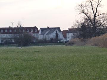 Projektfläche des Grünen-Gürtels-Groß-Gerau
