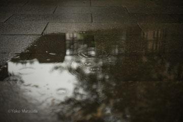 梅雨の声がそろそろ