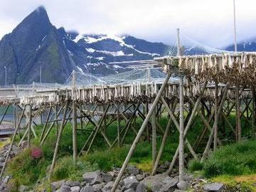 Séchage de la morue à l'air libre en Norvêge