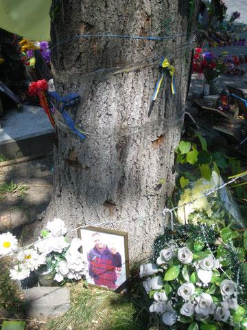 Einschusslöcher Baum Kiew Institutska-Straße Maidan