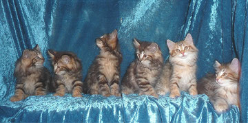 Njola mit ihren Geschwistern