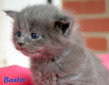 Baxter fast 4 Wochen