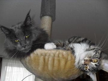 Romeo und Luna