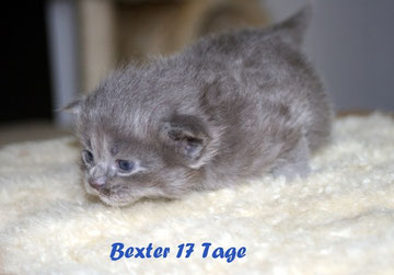 Baxter 17 Tage