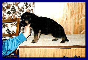 Триумф фон Нордэн(Модерн фон Нордэн-Луна фон Нордэн)инбр.Д Берта от Якова(2-2)