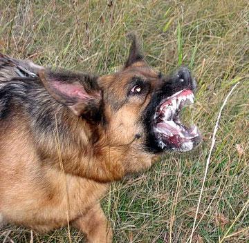 Зубы-комплект!!! :)