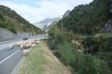 Au Pont de Cebers, le troupeau quitte la N134 élargie en E7 en 1995.