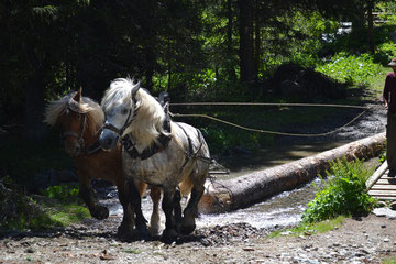 Longo Maï Hof Treynas: Holzrücken im Wald