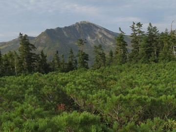 アラスカ庭園より黒部五郎岳を望む