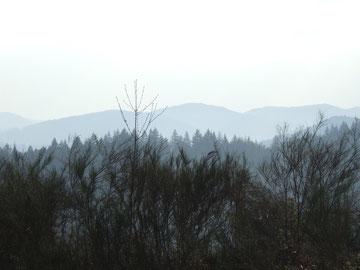 der Schwarzwald am frühen Morgen