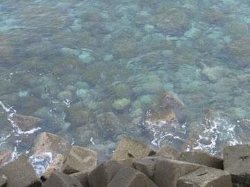 これ、かなり上から海を撮ってるんですが、わかります?底の石がクッキリ見えるくらい、水が澄んでるんです。
