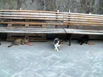 広場は、猫たちのえさ場でもあるようです。