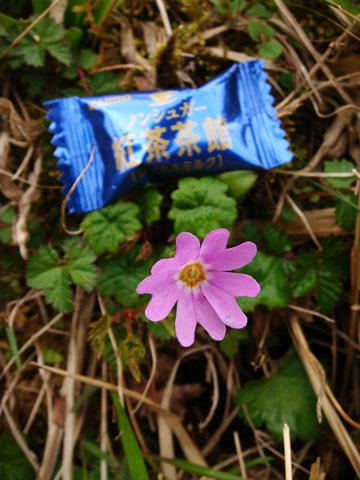 お菓子の長辺は約5cm。花の径はその半分ほど。