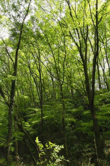 2011.05.01 狭山丘陵の風景