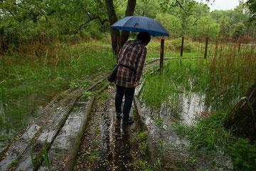 大雨で増水し、木道も浮いてまるでイカダ状態