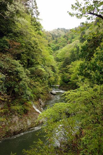 楢葉の渓谷 新緑がまぶしいほど美しい