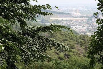 手前の樹の花はヤマボウシ 遠くに北関東横断道路が