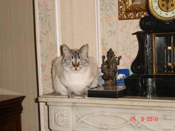sophie surnommée Fifi (15/05/2009 - 10/07/2017)