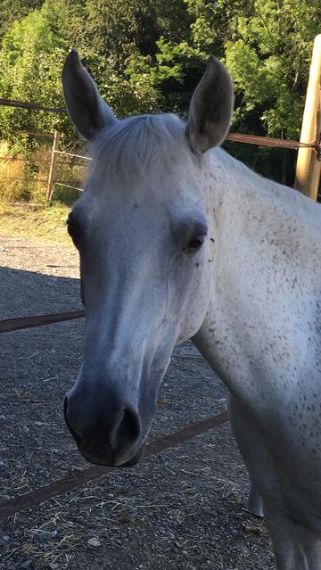 Unsere Ponys und Pferde sind eher älter und erfahren und eignen sich dadurch bestens für das Ponyreiten, Familienausflüge, MUKI Reiten, Reitunterricht, Reittherapie und vor allem im Umgang mit Kindern.