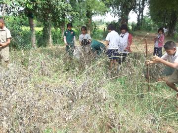 After 110 days, chlidren begin to dig soil to harvest