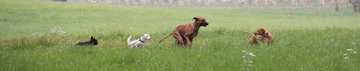 Hundewelt-Zürichsee