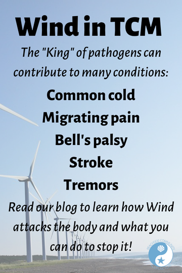 The Wind pathogen can contribute to the common cold, migrating pain, Bell's palsy, stroke and tremors - read more on the Beachside blog!