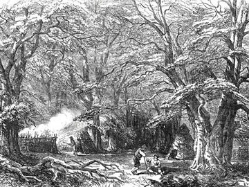 Charcoal burners in Mark Ash Wood in the New Forest, Hampshire from the Illustrated London News 21 October 1848