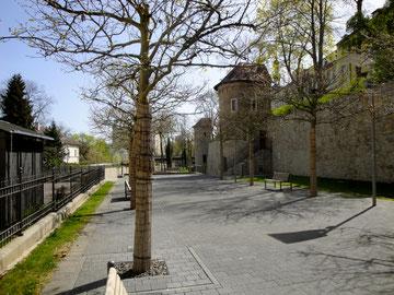 Die Stadtmauer am Unteren Marienbach