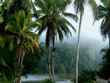 Naturreservatet Indio Maíz