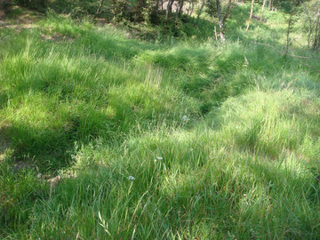 Trenches still visible on Monticelli Ridge