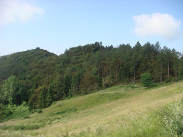 Monticelli Ridge in June 2014