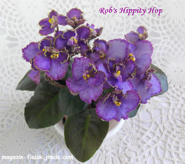 Rob's Hippity Hop (R.Robinson)