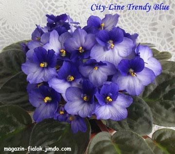 City-Line Trendy Вlue (T.Clements)