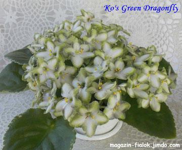 Ko's Green Dragonfly (S. Ko)