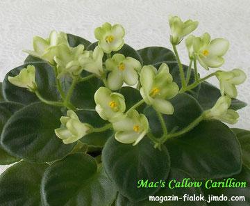 Mac's Callow Carillion (G.McDonald)