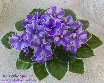 Ma's Blue Spinner (O. Robinson)