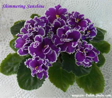 Shimmering Sunshine (Lyons)