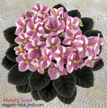 Humako Sweet (Humako)