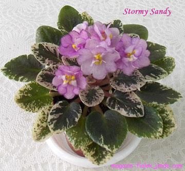 Stormy Sandy (H.Pittman)