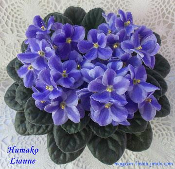 Humako Lianne (Humako)
